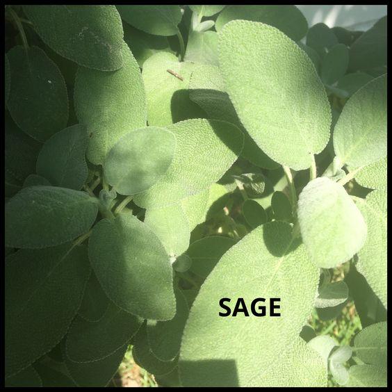 sagephoto1